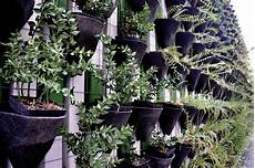To Plant Vertical Garden by How To Create A Vertical Garden Inside Your Home