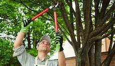 bäume schneiden bei b 252 sche schneiden kd57 casaramonaacademy