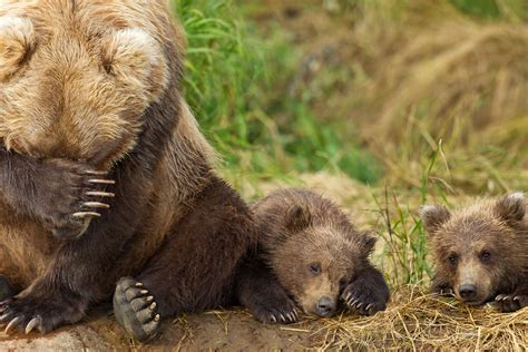 Won't You Please Adopt A Grizzly Bear Cub