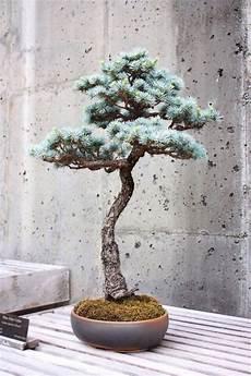 bonsai richtig pflegen den bonsai baum richtig und praktisch pflegen tipps