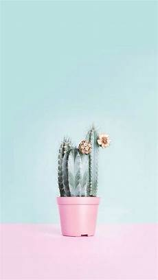 cactus flower iphone wallpaper wallpaper fondos de pantalla sigueme wallpapers in