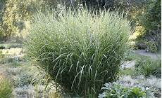 steingarten gräser winterhart auff 228 llige beetgestalten solit 228 rgr 228 ser gr 228 ser im garten