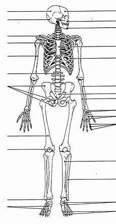 human skeletal system diagram labeled labeled human skull diagram printable human skeleton human skeleton anatomy human anatomy