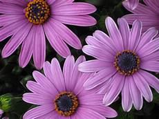 Blumen Im April Foto Bild Pflanzen Pilze Flechten