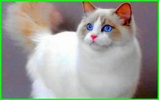 Gambar Kucing Lucu Imut Dan Paling Menggemaskan Sedunia