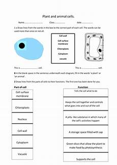 plant and animal cell worksheet by rosie1999 teaching resources tes