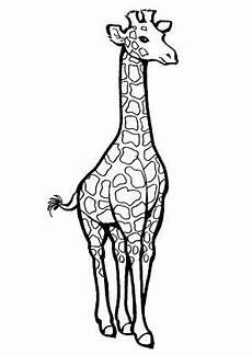 Ausmalbilder Kostenlos Ausdrucken Giraffe 8 Beste Ausmalbilder Giraffe Tiere Malvorlagen