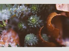 Plants Nature 4K HD Desktop Wallpaper for 4K Ultra HD TV
