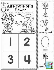 worksheets on plants cycle 13606 cycle of a flower students to learn about how things begin and change time this