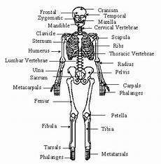 human skeletal system diagram labeled 48 best the human images on nurses nursing and nursing students