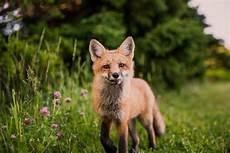 wildlife topics charity digital topics wildlife trust kicks off fifth annual social media caign