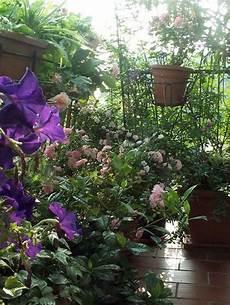 terrazzo in fiore una striscia di terrazzo compagnia giardinaggio
