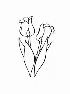 Ausmalbilder Blumen Tulpen Ausmalbilder Tulpen 5 Tulpen Malvorlagen