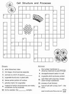 cell division worksheet with answers 6961 free cells worksheets 12 pages easy to from fransfreebies kool skool i d