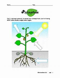 plants and photosynthesis worksheets 13616 photosynthesis steps diagram and worksheet by marylou breedlove tpt