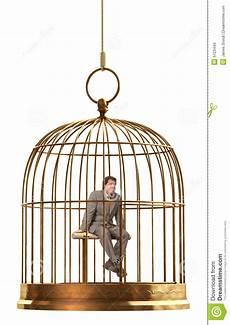uccellini in gabbia gabbia di uccello fotografia stock immagine di birdcage