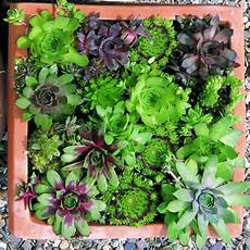 cacti and succulents for borders and accents hgtv