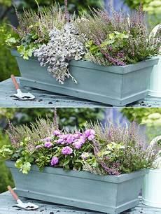 sukkulenten winterhart balkonkasten zwei varianten balkonkasten herbstlich bepflanzen