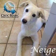 spa mulhouse chien adopter un chien croc blanc