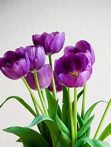 Tulip Delivery Melbourne tulips bouquet tulips flower delivery melbourne