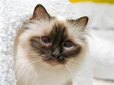 katzennamen was bedeutet der name ihrer katze
