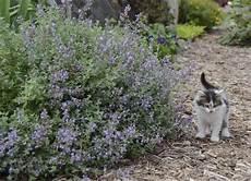 Plante Anti Moustique Et Rem 232 De Naturel 15 Solutions