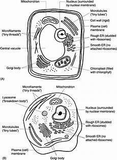 13 best images of cell organelle quiz worksheet biology cell organelles worksheet plant and
