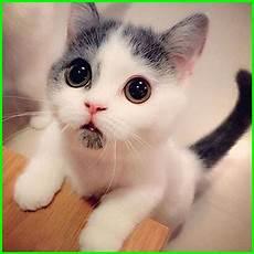 Lucu Gambar Kucing Comel Kucingcomel