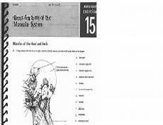 gross anatomy of the muscular system pdf review sheet