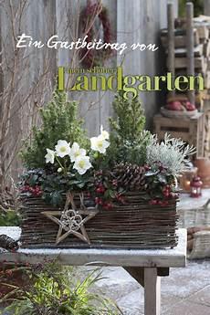 Garten Im Winter Dekorieren - winterliche christrosen weihnachtsdekoration garten
