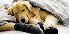 have dog will travel top pet friendly hotel chains