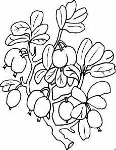 Malvorlagen Blumen Einfach Kleine Beeren Einfach Ausmalbild Malvorlage Blumen
