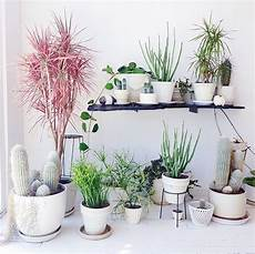 Home Decor Ideas Plants by 9 Gorgeous Ways To Decorate With Plants Melyssa Griffin