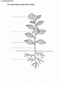 parts of the plants worksheets for grade 1 13716 plants interactive worksheet