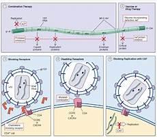 Cara Hiv Menyerang Sel Dan Treatment Yang Dikembangkan