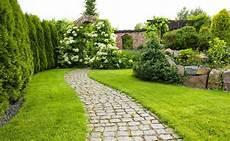 hecke thuja smaragd pflanzen wohn design