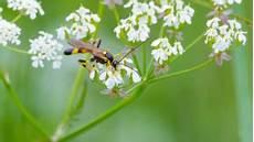 Pheromonfallen Und Lockstofffallen Gegen Motten