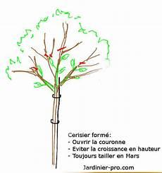 Taille De Formation D Un Cerisier Apprendre A Former Un