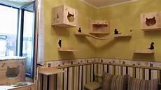 catwalk selber bauen diy katzen kletterwand 187 katzenblog de 252 ber katzen und katzenhaltung
