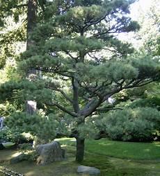 Jenis Pohon Rindang Untuk Depan Rumah