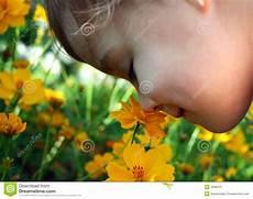 bambino sente l odore di bambino sente l odore di un fiore giallo fotografia