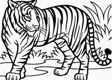 Kostenlose Malvorlagen Tiger Tiger Ausmalbilder L 246 Wen Malvorlagen Tiger Zeichnung