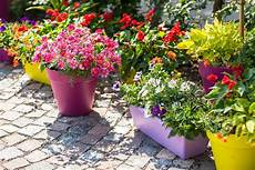 5 perks of growing a container garden
