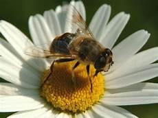 fiore con la a 13 novembre 2010 castigate 4