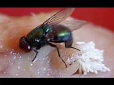 Begini Cara Lalat Makan Belum Banyak Orang Yang Tahu