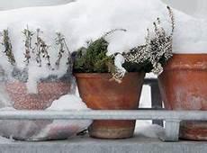 Margeriten Pflanzen Und Pflegen So Wird S Gemacht