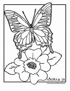 Ausmalbilder Schmetterling Auf Blume Butterfly Coloring Page With Flower Woo Jr Activities