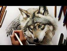 Colored Pencil Drawing Grey Wolf  Speed Draw Jasmina