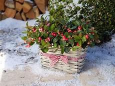 winterschutz die richtige wintervorbereitung f 252 r garten