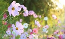 fiori d bach fiori di bach come funzionano leitv